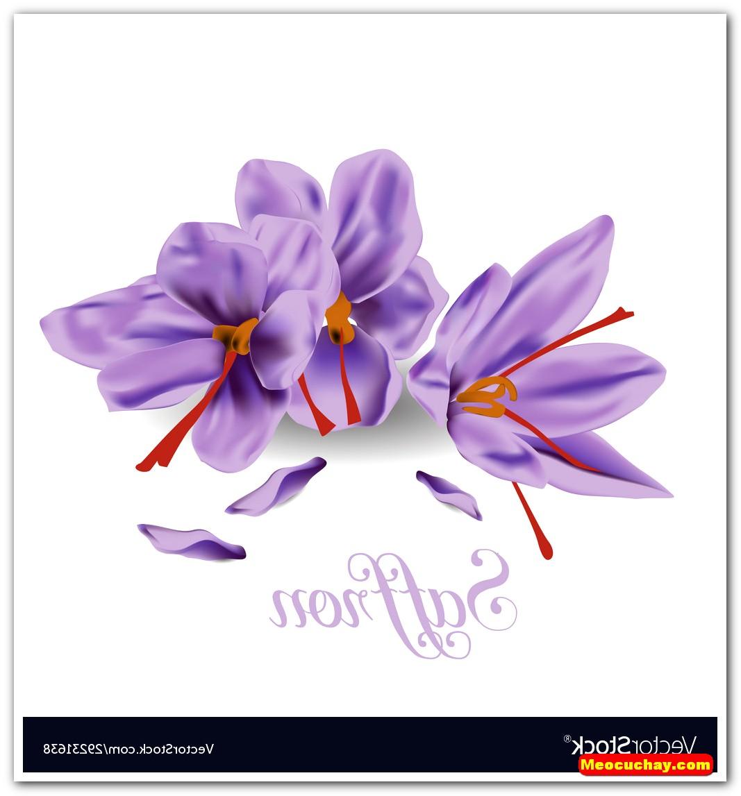 Nhuy-hoa-nghe-tay-saffron-iran (5)