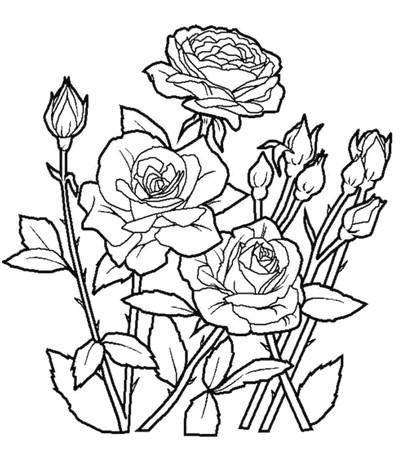 Tuyển Tập Các Mẫu Tranh Tô Màu Bông Hoa đẹp